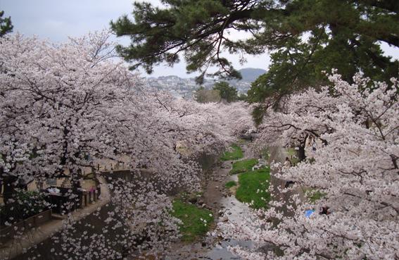 桜〜.jpg